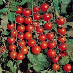 Rosii-cherry