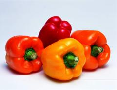 Pepper fresh wholesale