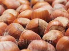 Фундук орехи в Молдове
