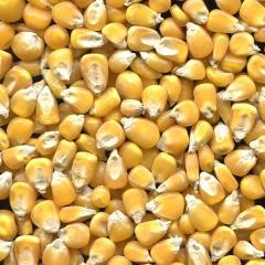 Кукуруза зерно в Молдове
