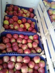 Paper for apples Chisina