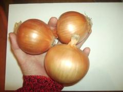 Onion, grade Chalcedony