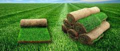 Газоны рулонные, газоны луговые, газоны