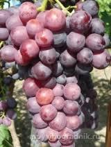 Grapes Cardinal