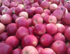 Яблоки мелкоплодные