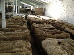 Шкура овцы на экспорт