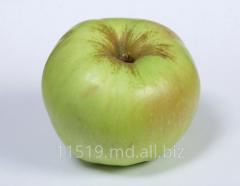 Яблоки зимних сортов