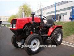 Mini tarım