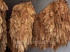 Tutun în Moldova