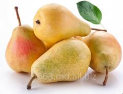 Pear in Moldova