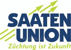 Семена подсолнечника селекции Saaten Union Paraiso
