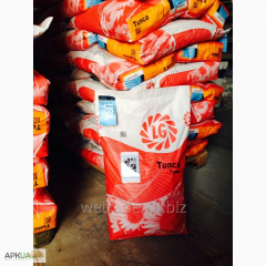 Seeds of corn of selection of limagrain lg 23.06