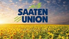 Seeds of sunflower of selection of saaten union