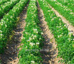 Dovskhodovy Frontier Optima herbicide
