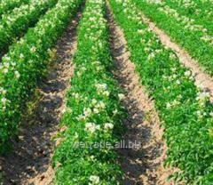 Dovskhodovy Glyphogan 480 SL herbicide