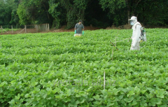 Acanto Plus SC fungicide