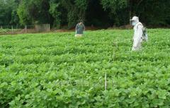 Ardent 50 SC fungicide