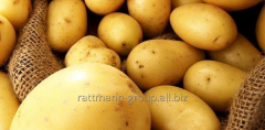 Семена картофеля, Скарлетт