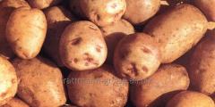 Potatoes in Moldova, Nikulinsky
