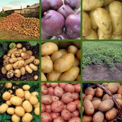 Семена картофеля разных сортов в Молдове