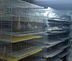 Cages for quails, maintenance and cultivation!