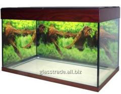 Aquarium on 240 liters