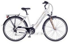 Dynasty 2016 bicycle