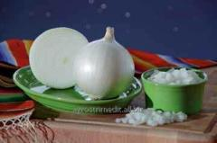 Onion seeds F1 Come