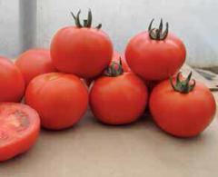 Семена Томатов Валдай F1 (для закрытого грунта)