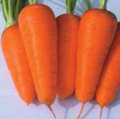 Семена моркови Ред Кор