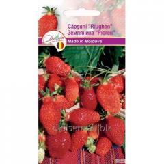 Semyon Evro Wild strawberry Rügen