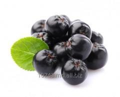 Aronia nero (черноплодная рябина)
