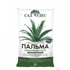 Nutritious Soil Palm tree