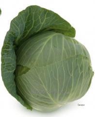 Семена капусты белокочанной Такома F1
