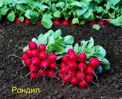 Garden radish seeds Rondil F1