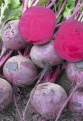Seeds of beet of Zepo of F1
