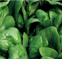Seeds of spinach of the Boa of F1