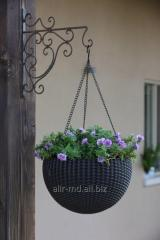 Cache-pot suspended rattan of RATTAN SPHERE