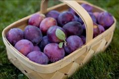Plum (prune)