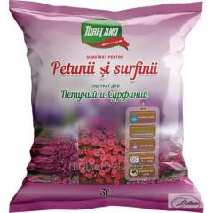 Substratum for Petunias and Surfiny Torflend of 3