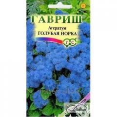 Ageratum Blue mink of 0,1 g