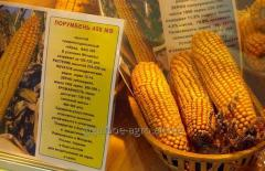 "Corn hybrid ""Porumben 458"