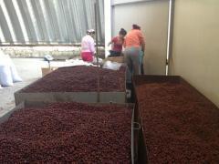 Плоды шиповника  (Selling dried rose hips  )