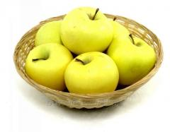 Apples Golden for expor