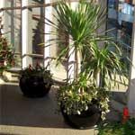 Winter gardens and phytodesign of interiors