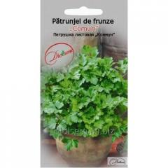 Parsley leaf Comun