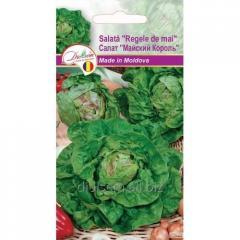 Seeds of lettuce