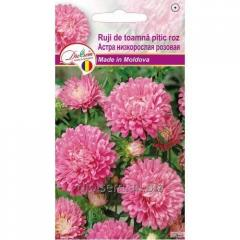 Семена Астра низкорослая розовая 0,1гр.