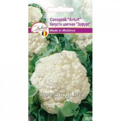 Seeds of cauliflower