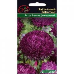 Семена Голд Астра Балон фиолетовый 0,2 гр.